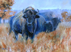 Tallgrass Buffalo